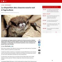 La disparition des chauves-souris nuit à l'agriculture