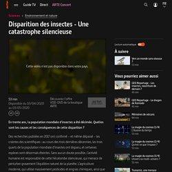 Disparition des insectes - Une catastrophe silencieuse