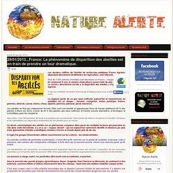 29/01/2013...France: Le phénomène de disparition des abeilles est en train de prendre un tour dramatique.