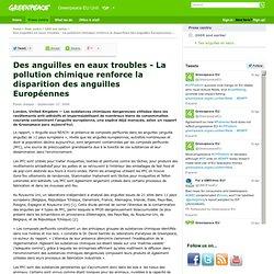 GREENPEACE 27/09/06 Des anguilles en eaux troubles - La pollution chimique renforce la disparition des anguilles Européennes