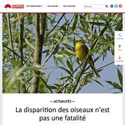 La disparition des oiseaux n'est pas une fatalité