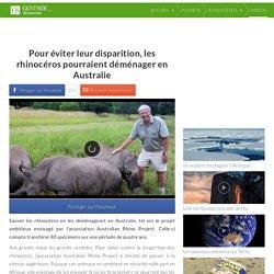 Pour éviter leur disparition, les rhinocéros pourraient déménager en Australie
