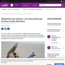 Disparition des oiseaux : vers des printemps de plus en plus silencieux