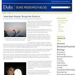 'Hoot-Dash Display' Brings the Chicks In