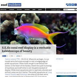 S.E.A's coral reef display is a veritable kaleidoscope of beauty