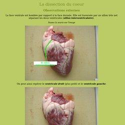 Dissection du coeur