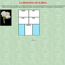 Dissection d'une fleur