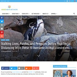 Stalking Lions, Pandas, and Penguins During Your Social Distancing With These 10 Awesome Animal Livestreams