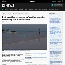 Distressed horse rescued by 'local heroes' after swimming 2km out to sea in SA