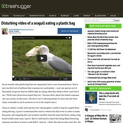 Disturbing video of a seagull eating a plastic bag