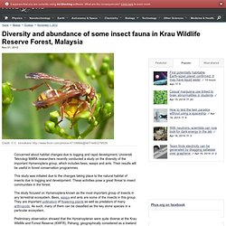 Diversity and abundance of some insect fauna in Krau Wildlife Reserve Forest, Malaysia