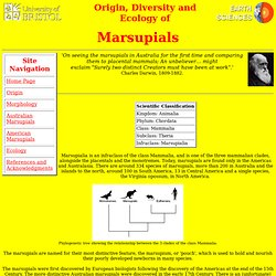 Origin, Diversity and Ecology of Marsupials