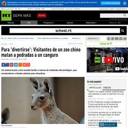 Para 'divertirse': Visitantes de un zoo chino matan a pedradas a un canguro