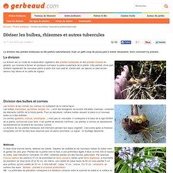 Division des bulbes, rhizomes et autres tubercules