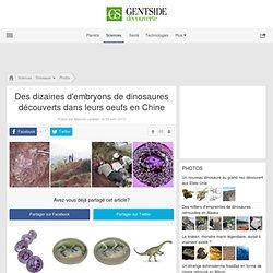 Des dizaines d'embryons de dinosaures découverts dans leurs oeufs en Chine