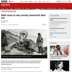 DNA clues to why woolly mammoth died out