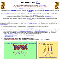 DNA Structure - Contents page