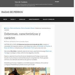 Doberman, caracteristicas y caracter