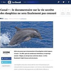 Canal + : le documentaire sur la vie secrète des dauphins ne sera finalement pas censuré
