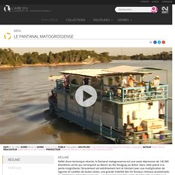 Documentaire > Le Pantanal Matogrossense