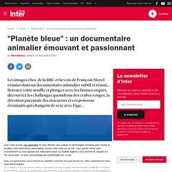 """""""Planète bleue"""" : un documentaire animalier émouvant et passionnant"""