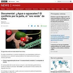"""Documental: ¿Agua o aguacates? El conflicto por la palta, el """"oro verde"""" de Chile"""
