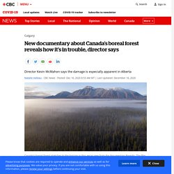 New documentary about Canada's boreal forest reveals how it's in trouble, director says