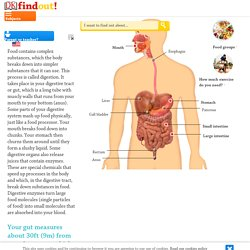 How Does the Digestive System Work for Kids