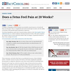 Does a Fetus Feel Pain at 20 Weeks?