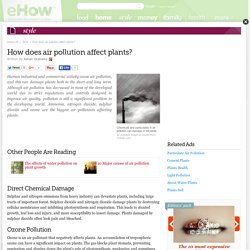 How does air pollution affect plants?