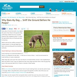 Why Does My Dog . . . Sniff the Ground Before He Poops? - Vetstreet