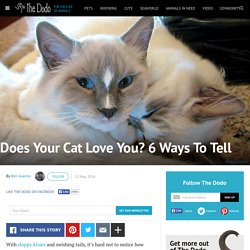 Does Your Cat Love You? 6 Ways To Tell