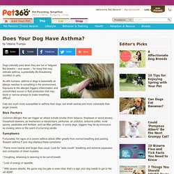 Does Your Dog Have Asthma?