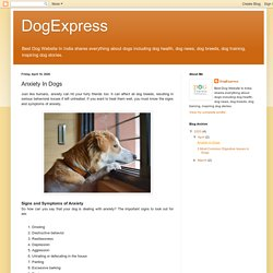 DogExpress: Anxiety In Dogs