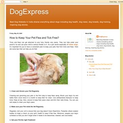 DogExpress: How to Keep Your Pet Flea and Tick Free?