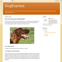 DogExpress: Why Your Dog Has A Bad Breath?