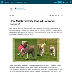 How Much Exercise Does A Labrador Require? : dogexpressusa — LiveJournal