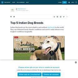 Top 5 Indian Dog Breeds : dogexpressusa — LiveJournal