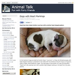 Dogs with Heart Markings