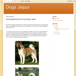 Dogs Jaipur: Find the Best Clinic for Your Dog in Jaipur
