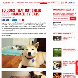 10 Dogs That Got Their Beds Hijacked By Cats