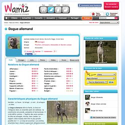 Dogue allemand : chien et chiot. Great Dane, Grand danois, Deutsche Dogge