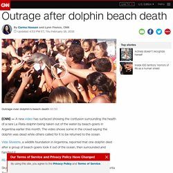 Dolphin dies after beachgoers take it out of the water