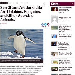 Sea otter, dolphin, and penguin behavior: Your favorite animals are jerks.