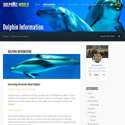 Dolphin Information - Dolphin Facts and Information