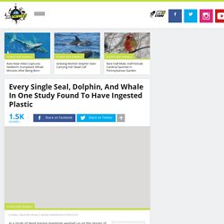 Every Single Seal, Dolphin, And Whale In One Study Found To Have Ingested Plastic