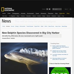 New Dolphin Species Discovered in Big City Harbor