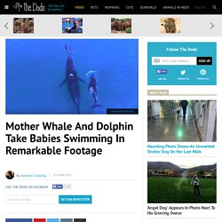Mother Whale And Dolphin Take Babies Swimming In Remarkable Footage