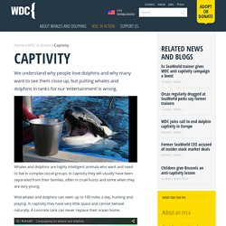 Whales and dolphins in captivity - Facts and information