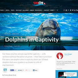 Dolphins in Captivity - Scuba Diver Life